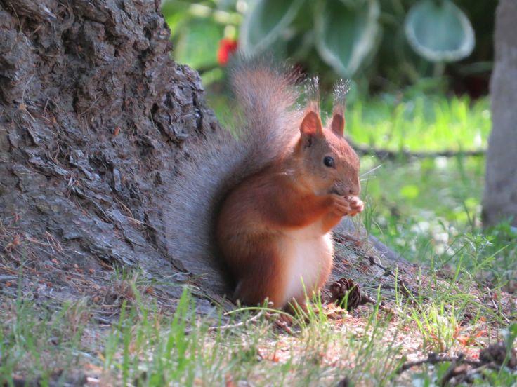 Squirrel <3