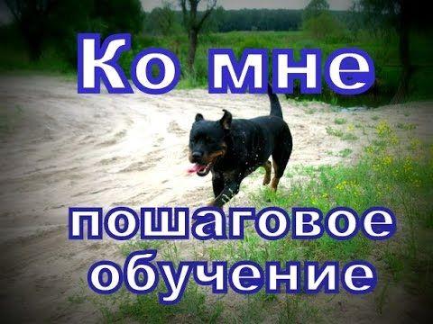 Ко мне обучение собаки - пошаговая дрессировка - YouTube