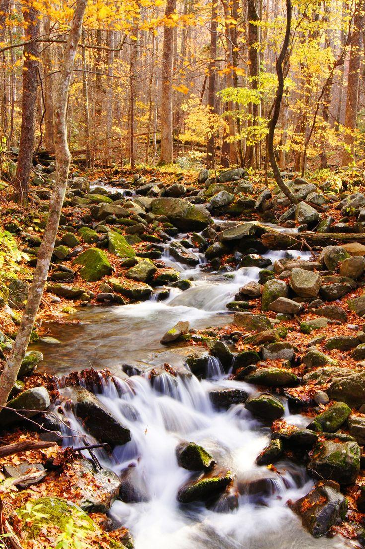 Smoky Gold Autumn.- Smoky Mountain National Park, Tennessee - beautiful ~