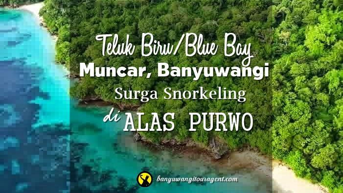 Teluk Biru Muncar Banyuwangi disebut juga Blue Bay dulunya bernama Selanggrong. Memiliki keindahan bawah laut yang sangat cocok untuk snorkeling.