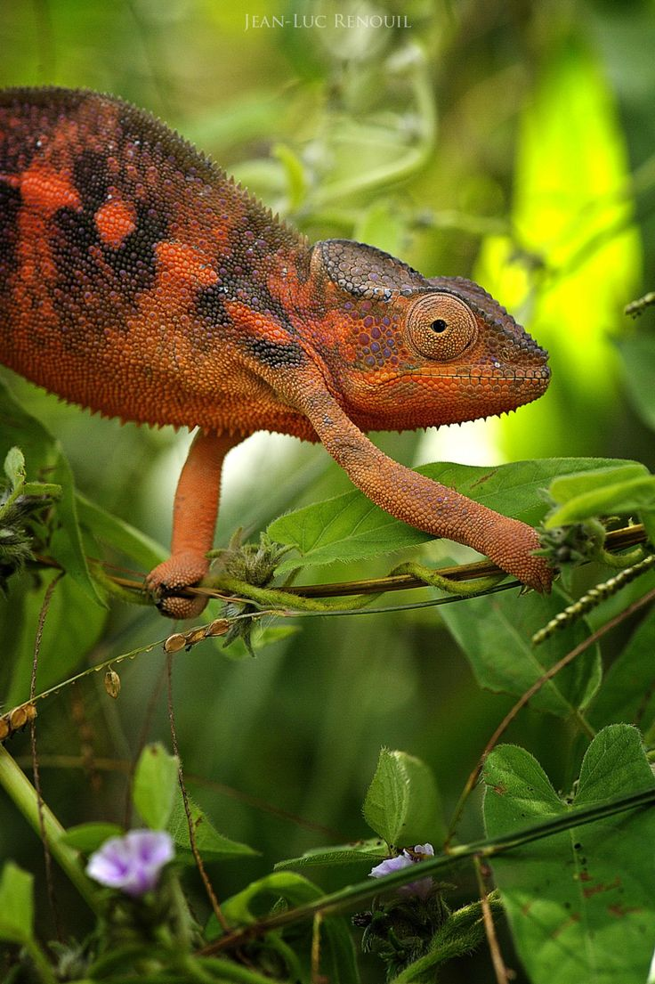 631 best lizards snakes u0026 other reptiles images on pinterest