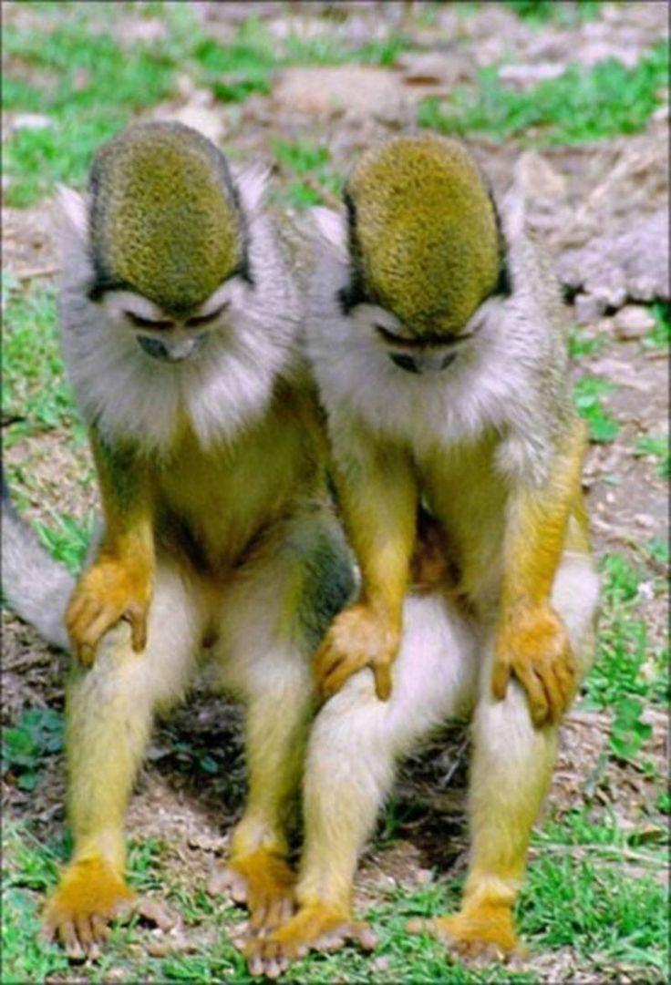Les 25 meilleures id es concernant images de singe dr le - Videos droles d animaux ...