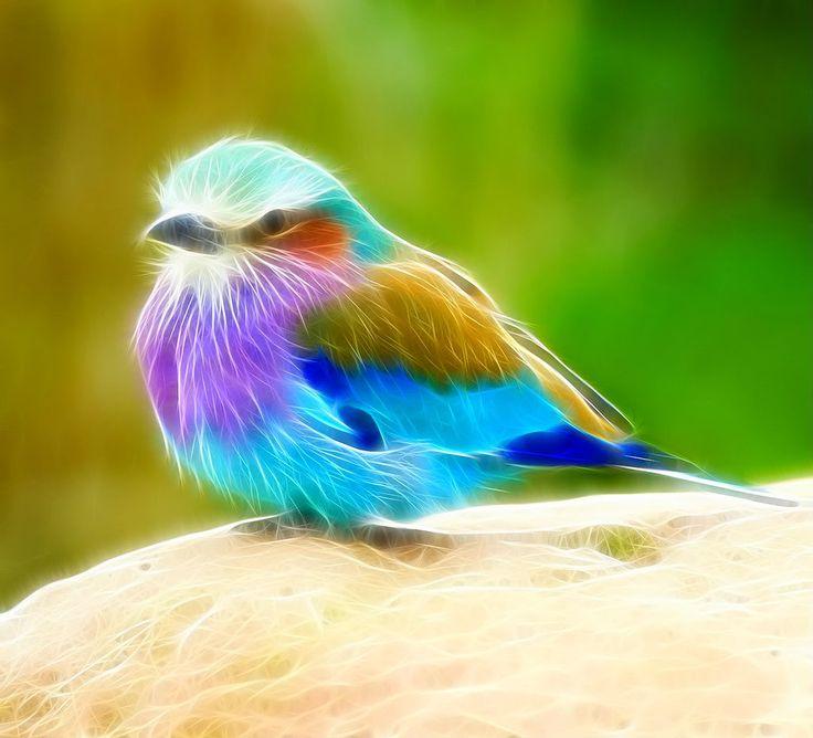 Bird of paradise animal drawing - photo#20