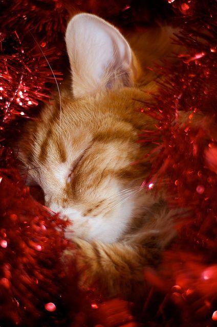 Christmas Kitty by Aimée Lou