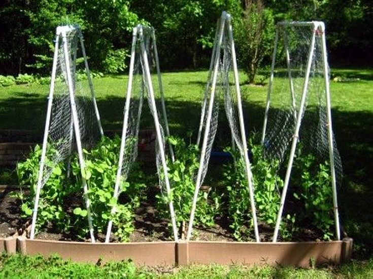 Trellises Constructed From Pvc Pipes Pea Trellis 400 x 300