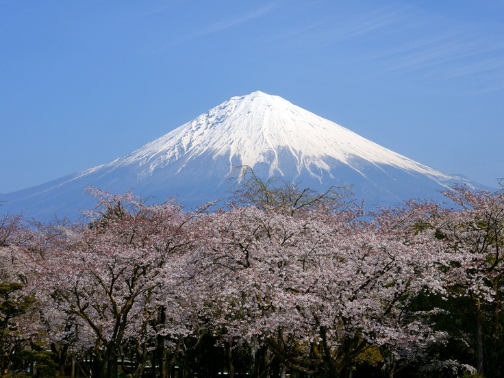 See cherry blossoms and Mt Fuji in Japan