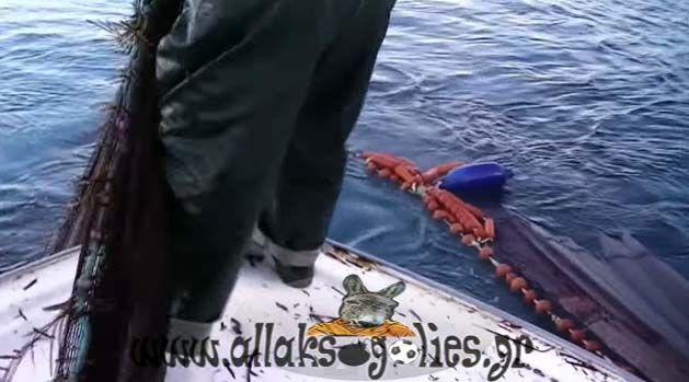 Βίντεο: Τα δίχτυα ήταν γεμάτα αλλά σοκαρίστηκαν με αυτό που είδαν...