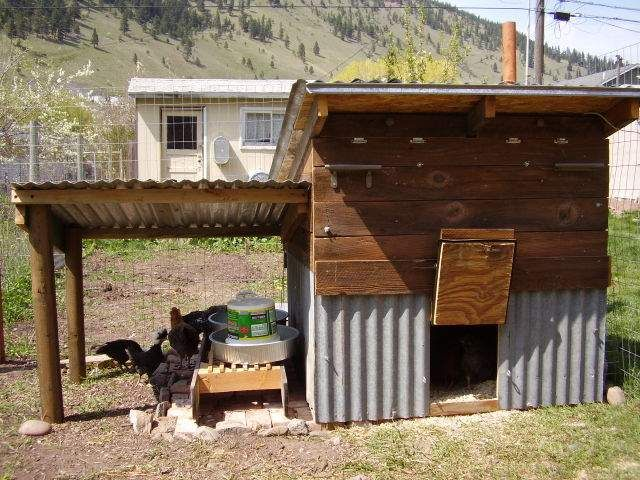 montana egg cabin: Chicken House