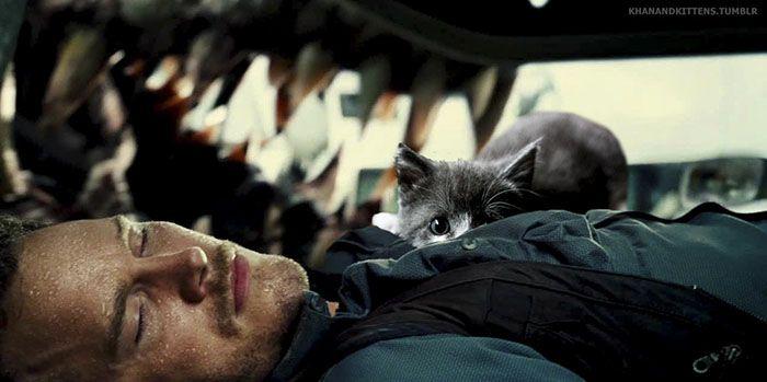 Des chats à la place des dinosaures de Jurassic Park  2Tout2Rien