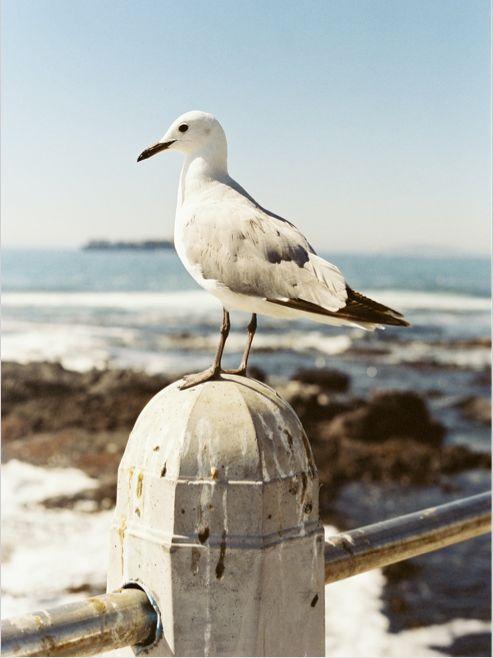 Seagull on the beach. #summer #beach #seagull