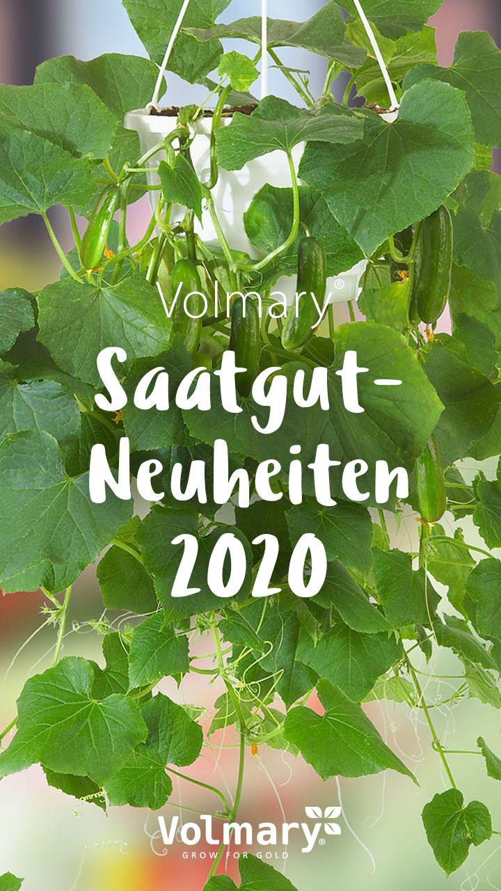 Entdecke Volmary Gurkensamen Und Die Beliebtesten Sorten In 2020 Gurkenpflanze Gemuseanbau In Kubeln Saatgut