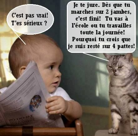 Le secret des chats