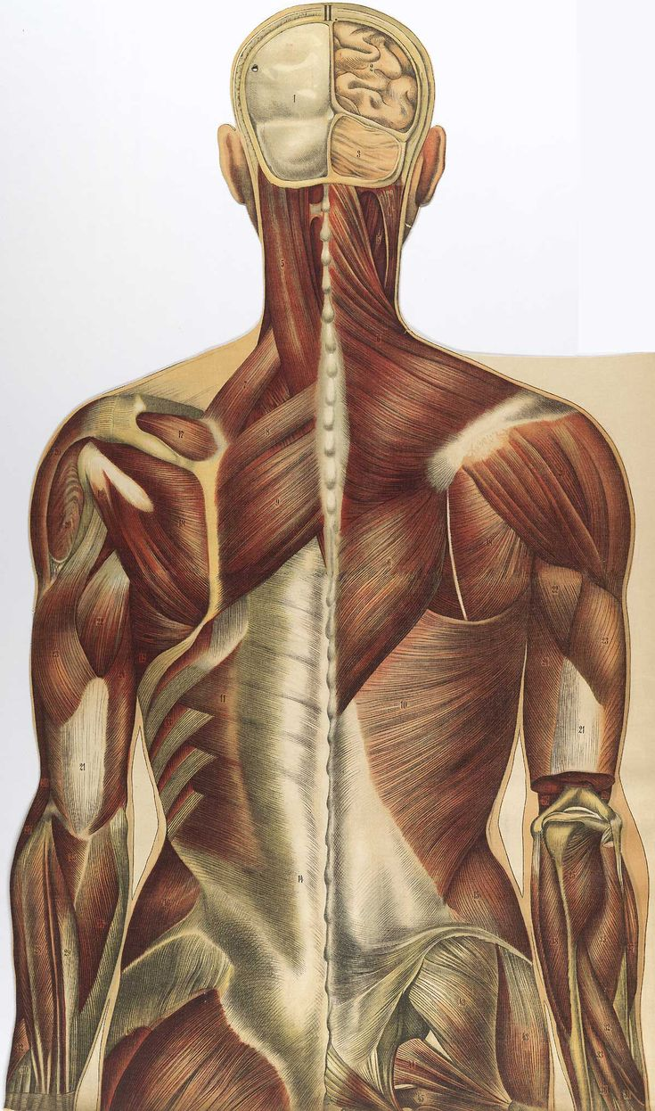 18 best Tensegrity images on Pinterest | Anatomy, Exercises and ...