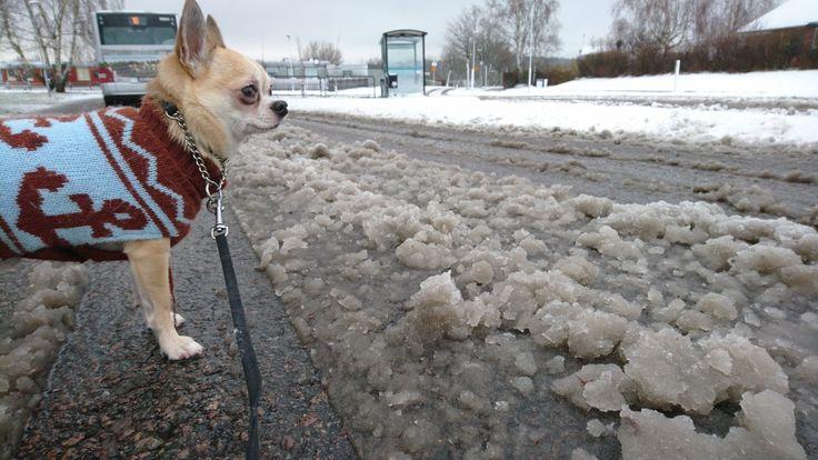 Gillar inte brun snö...