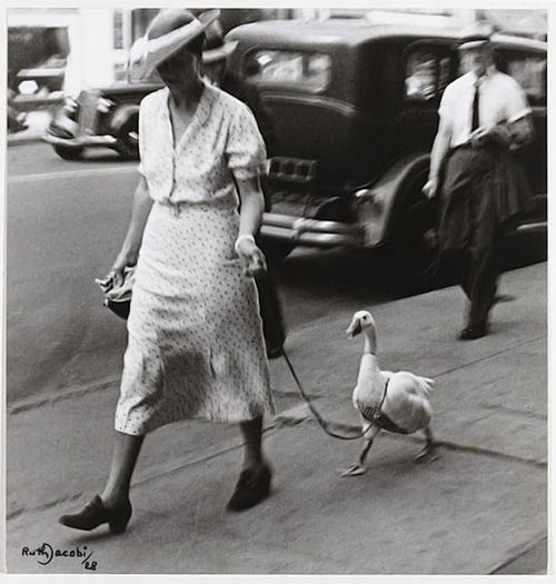 marmartinz: Ruth Jacobi ~ New York, 1928-another one for Momo since he loves Bokboks.