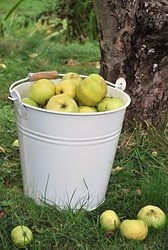 Green ApplesApples Pick, Farms Buckets, Apples Green, Fruit Desserts Cream, Green Apples, Buckets Full, Favorite, Green Glee, Barrels S Baskets S Buckets