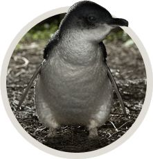 Adopt-a-Penguin today! Yes, please