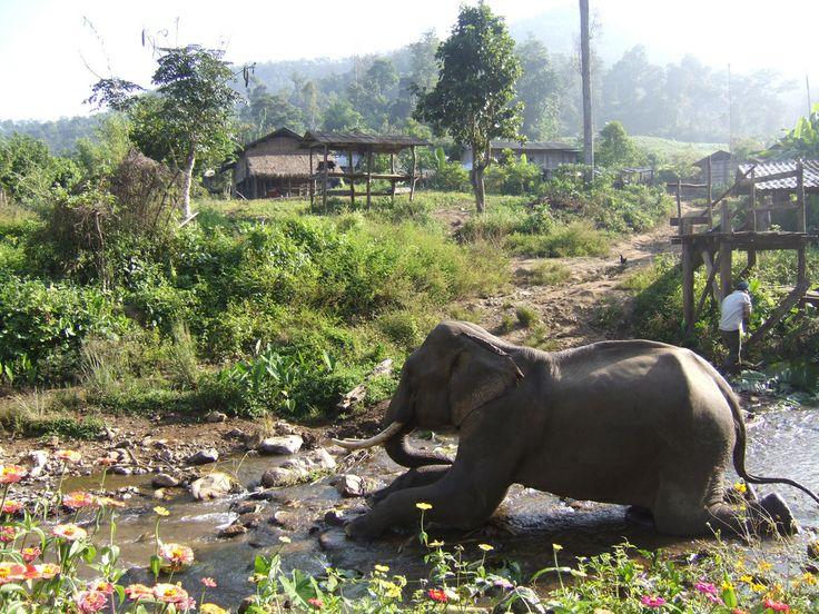 Elephant showering | Flickr - Photo Sharing!