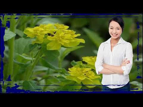 MusculacionYMas https://www.youtube.com/watch?v=ga3yECOYrCU como se planta la ruda macho y hembra -