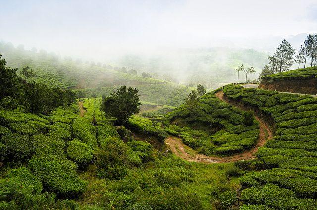 Munnar, Kerala | Flickr - Photo Sharing!