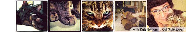 Hauspanther.com digs StarkRavingcat.com's Catnip Joints & Other Treats. Go Stark Raving Cat!