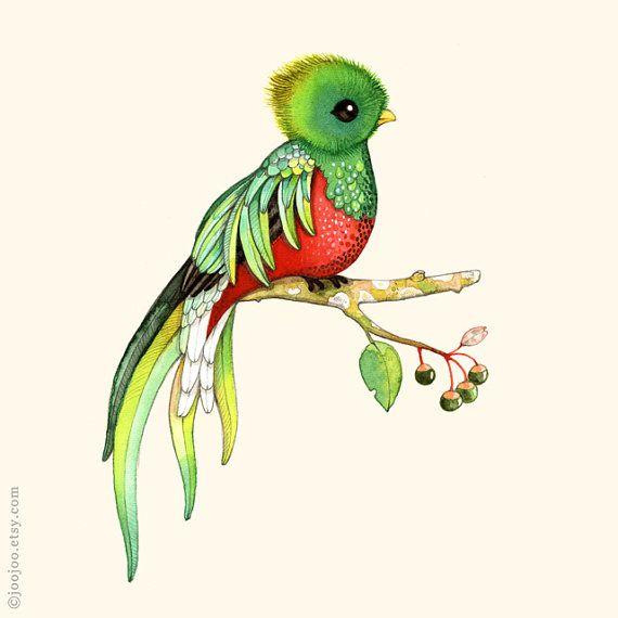 Q ist für Quetzal Q Comme Quetzal Q de Quetzal  Drucken einer original Aquarell Illustration von mir.  Meine Abzüge sind Archivierung, lichtbeständige und