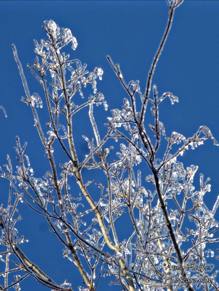 Amy Fiedler Photography, Ice Storm 2013, Oshawa Ontario