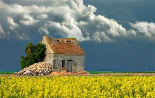 Stone cottage in yellow field tiny houses pinterest for French countryside house
