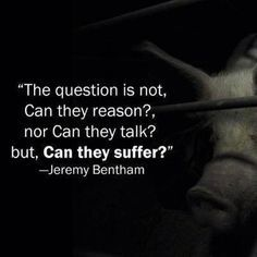 """The question is not """"Can they reason?"""", nor """"Can they talk?"""", but rather """"Can they suffer?"""" - Jeremy Bentham"""