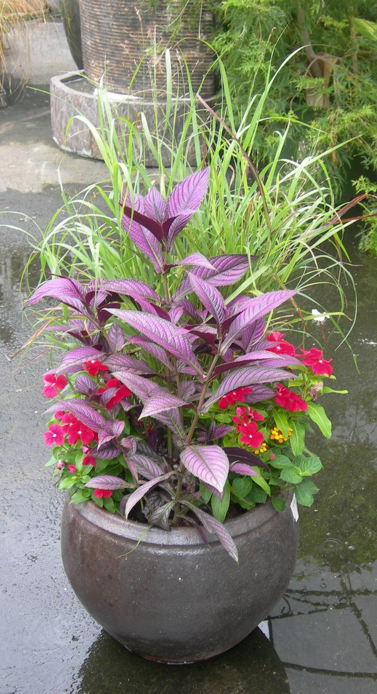4177 best garden: in containers images on pinterest | plants