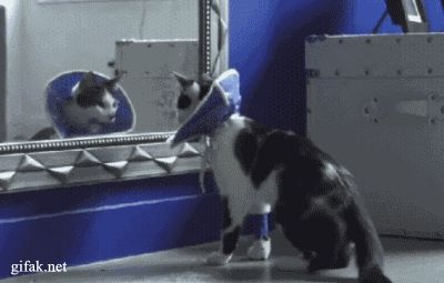 Today Top 21 LOL gifs gallery - LMAO #8 - Page 7 of 20