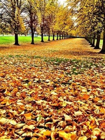 Stormont leaves, Belfast