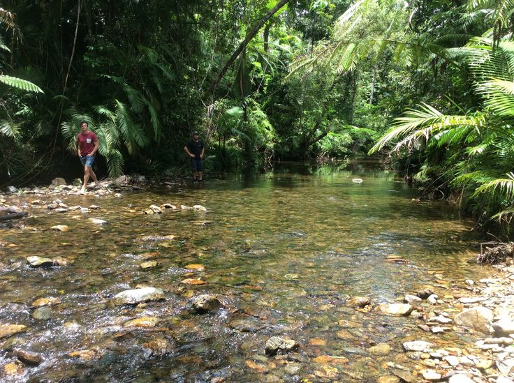 Exploring a secluded rainforest stream Daintree National Park