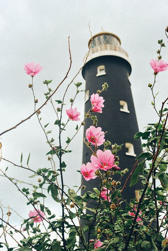 black lighthouse + pink flowers