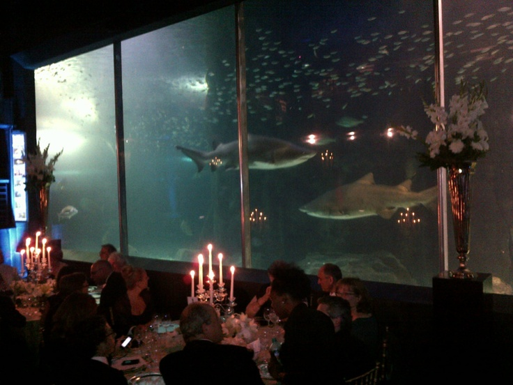 A Golden Dinner in the Predator Tank... Perfect for both Local & International guests.