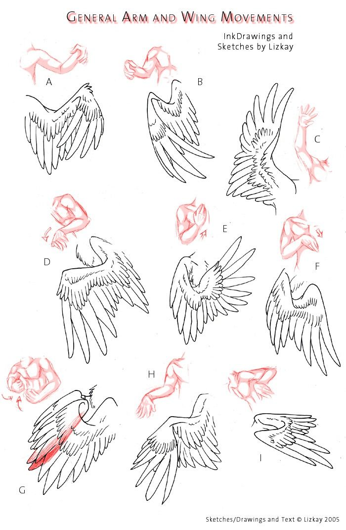 Wing references for different arm positions.