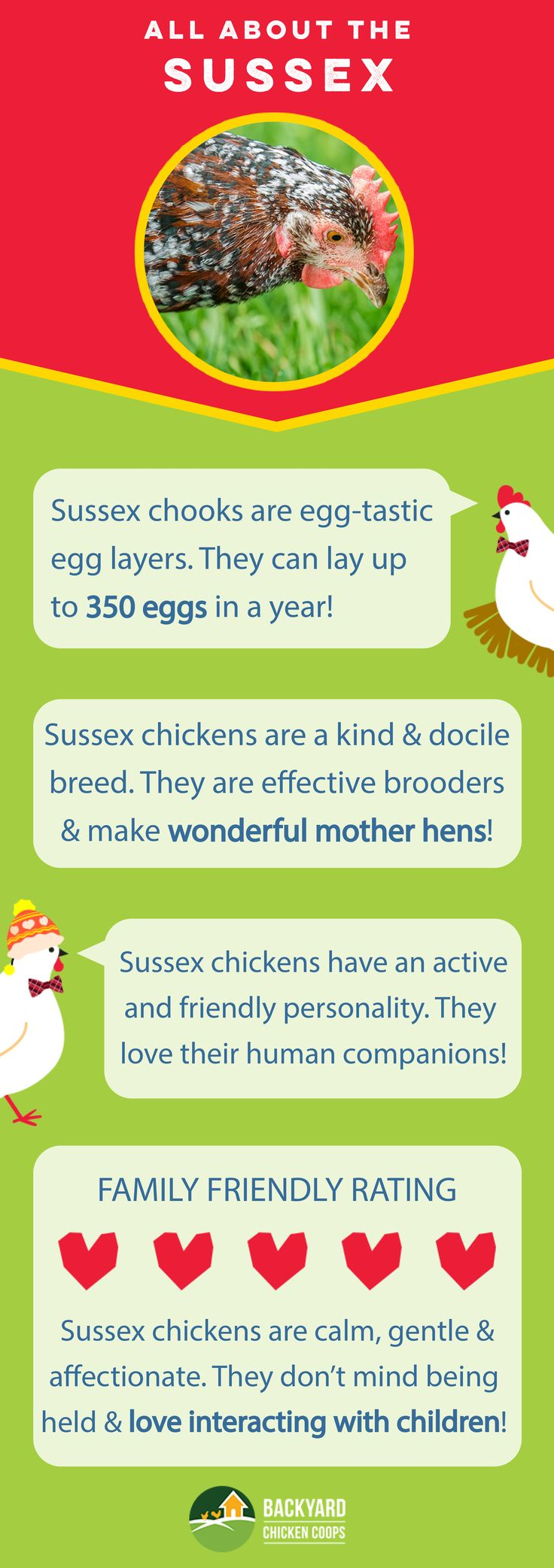 Sussex chickens make wonderful additions to any backyard flock with their many egg-tastic qualities and loveable personality! Check out their breed profile here, http://www.backyardchickencoops.com.au/breed-profile-sussex/  #loveyourchickens #infographic #sussexchickens