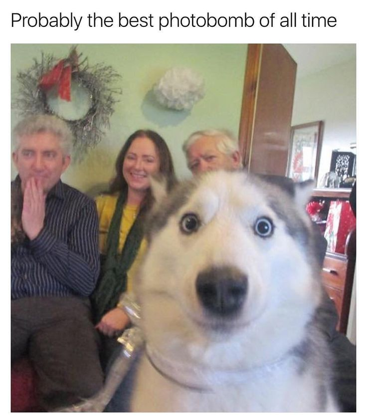 and the award for best photo bomb goes to Hector the Husky!