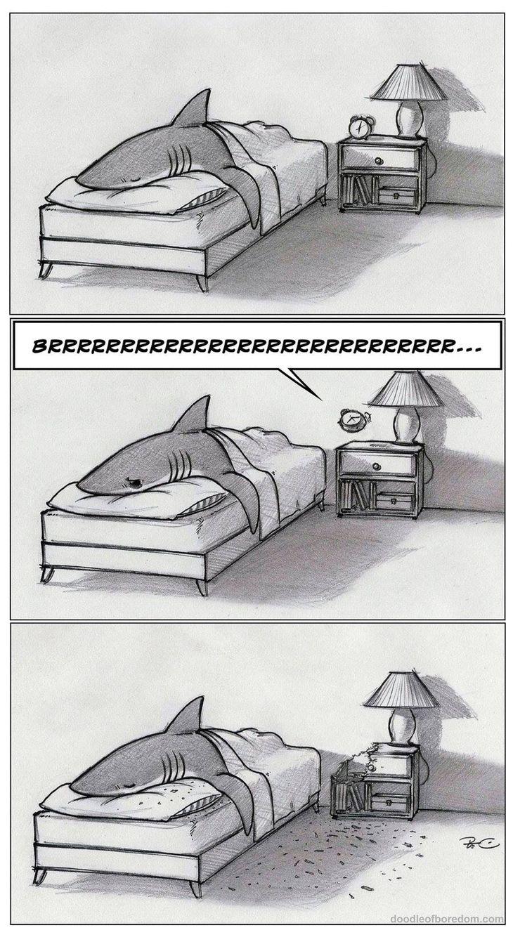 Sharks hate alarm clocks too