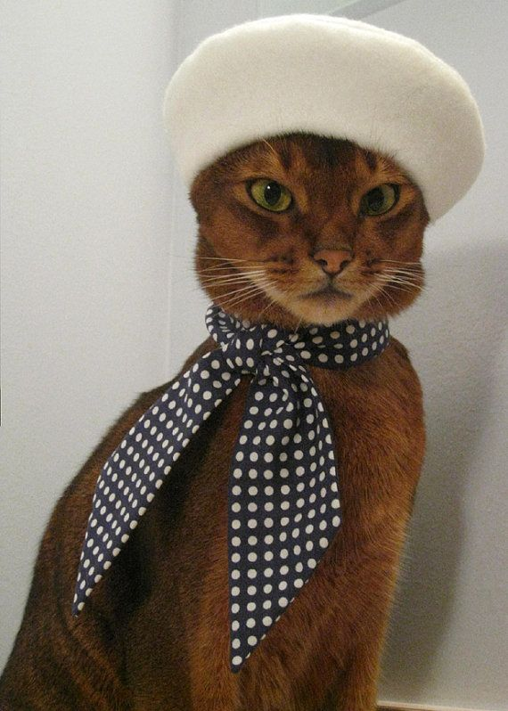 classy cat...is classy