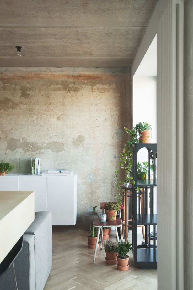 Plants & wall