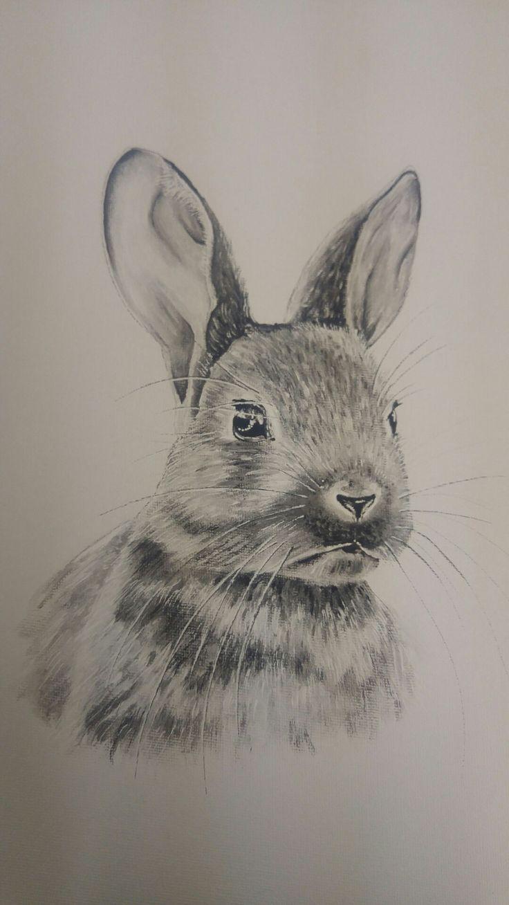 Ber ideen zu kaninchen zeichnung auf pinterest kaninchen illustration menschen - Hase zeichnen ...