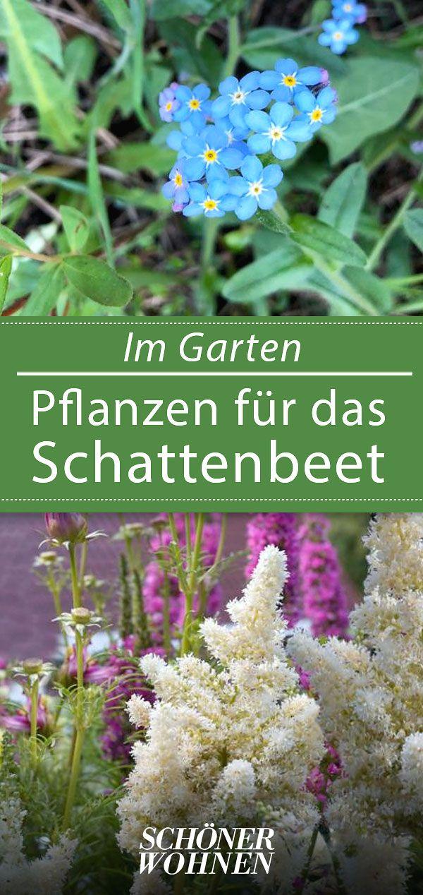 Schattenpflanzen & Schattengewächse von A-Z: P wie Prachtspiere (Astilbe)