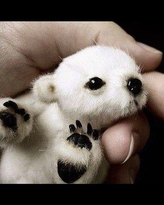 Sad news to hear that Africa's last polar bear, Wang, died in the Johannesburg Zoo this week. His keepers say the 30-year-old fur ball died of a broken heart after his female companion of 27-years, GeeBee died in January. Sorry to burden you with that 'The Notebook' sequel, so here's a photo of a baby polar bear to cheer us up.