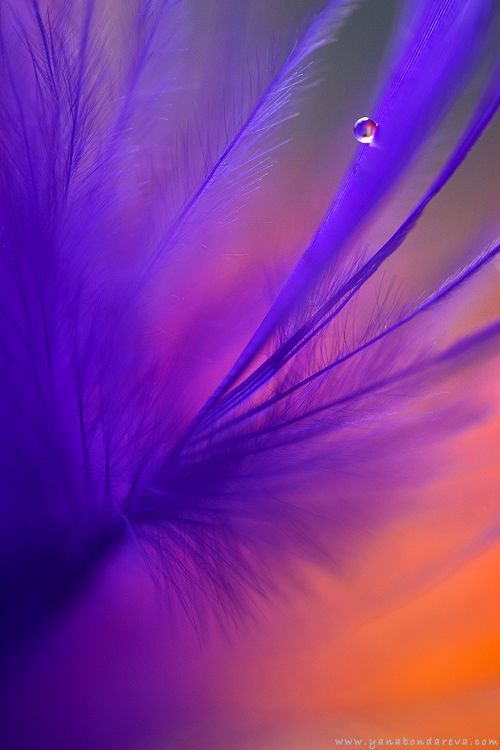 90 best images about purple and orange color mix on pinterest. Black Bedroom Furniture Sets. Home Design Ideas