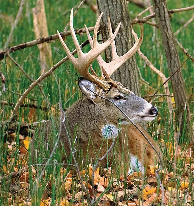 Louisiana Deer Map%0A Whitetail Tips  How to Map Your Hunting Area   Outdoor Life  deerhuntingtips