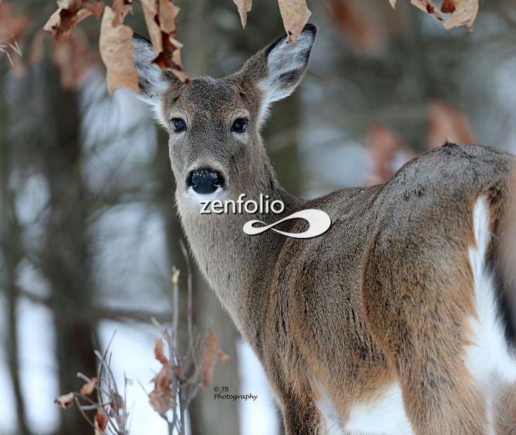 Deer lick farm bruswick oh