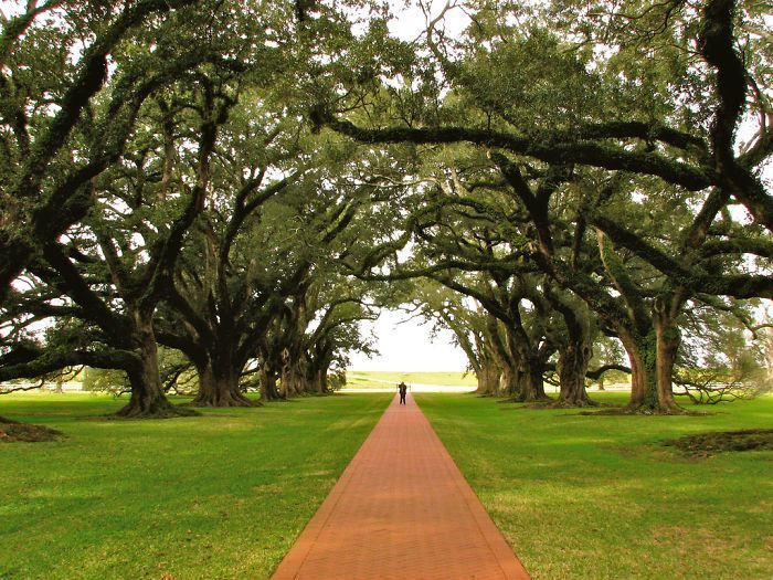 29 Of The World's Most Beautiful Tree-Lined Streets. Very beautiful. A plantation outside New Orleans. Saw it in person.