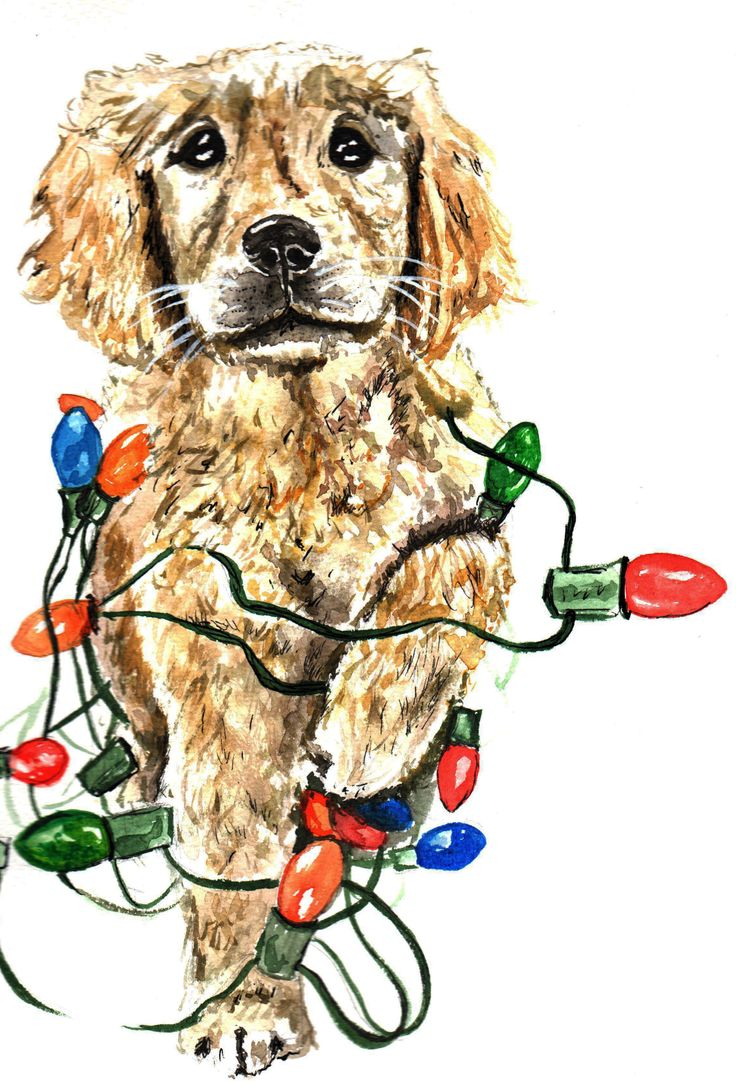 Puppy Tangled in Christmas Lights Drawing illustrations