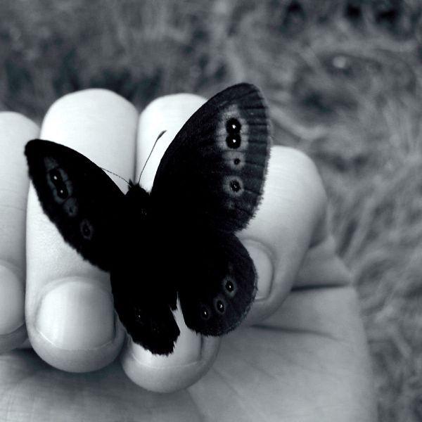 #butterfly #hand